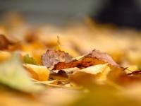 fall depression tips